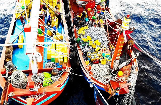 """Làng biển thu 1.000 tỷ đồng mỗi năm nhờ đi săn loài cá """"khủng"""" - Ảnh 5."""