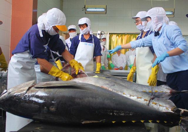 """Làng biển thu 1.000 tỷ đồng mỗi năm nhờ đi săn loài cá """"khủng"""" - Ảnh 8."""