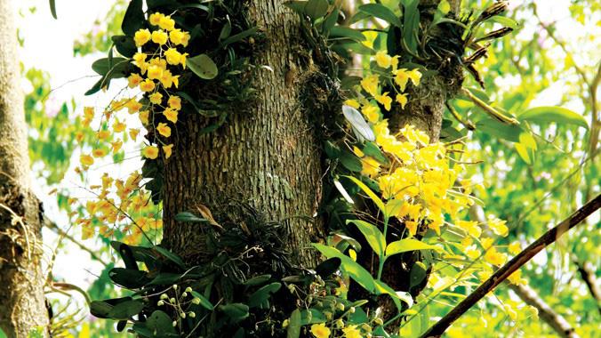 Khu bảo tồn hoa lan rừng độc nhất vô nhị ở Tây Nguyên nằm ở tỉnh nào? - Ảnh 1.