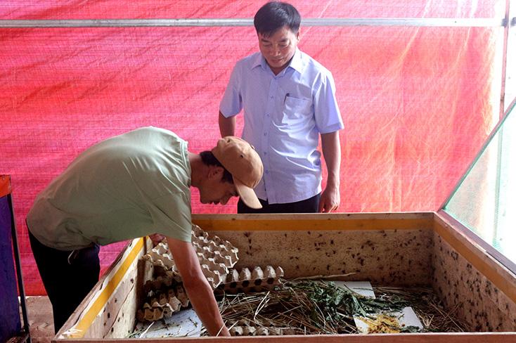 """Trai làng tỉnh Quảng Bình làm giàu khác người nhờ nuôi con đặc sản """"độc lạ"""" - Ảnh 2."""