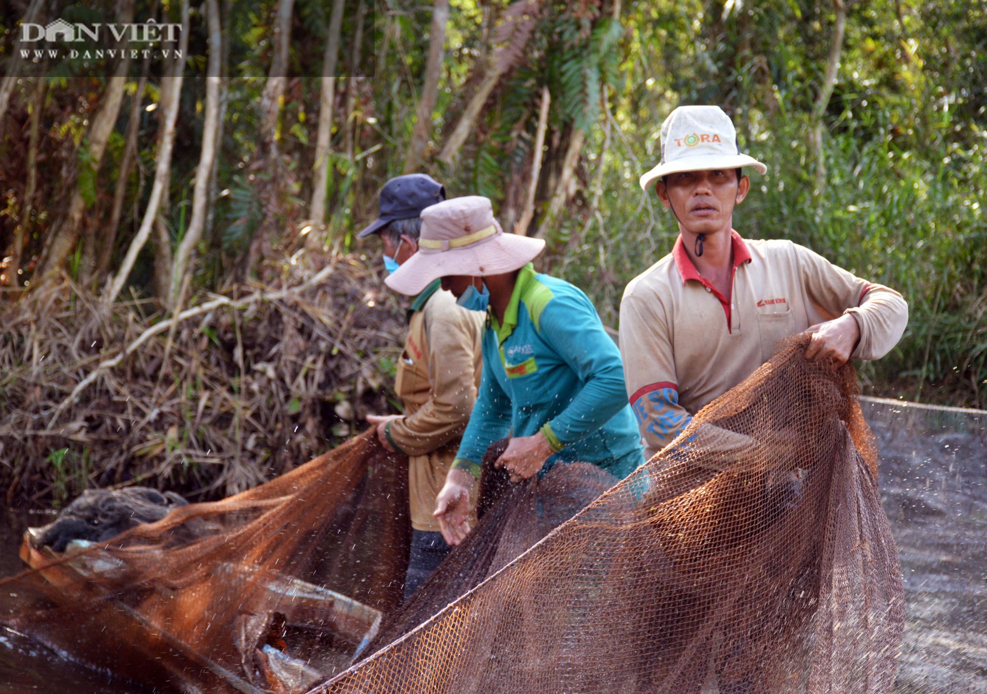 Về vườn quốc gia U Minh Hạ mục sở thị cảnh chụp đìa bắt hàng trăm kg cá đồng - Ảnh 5.