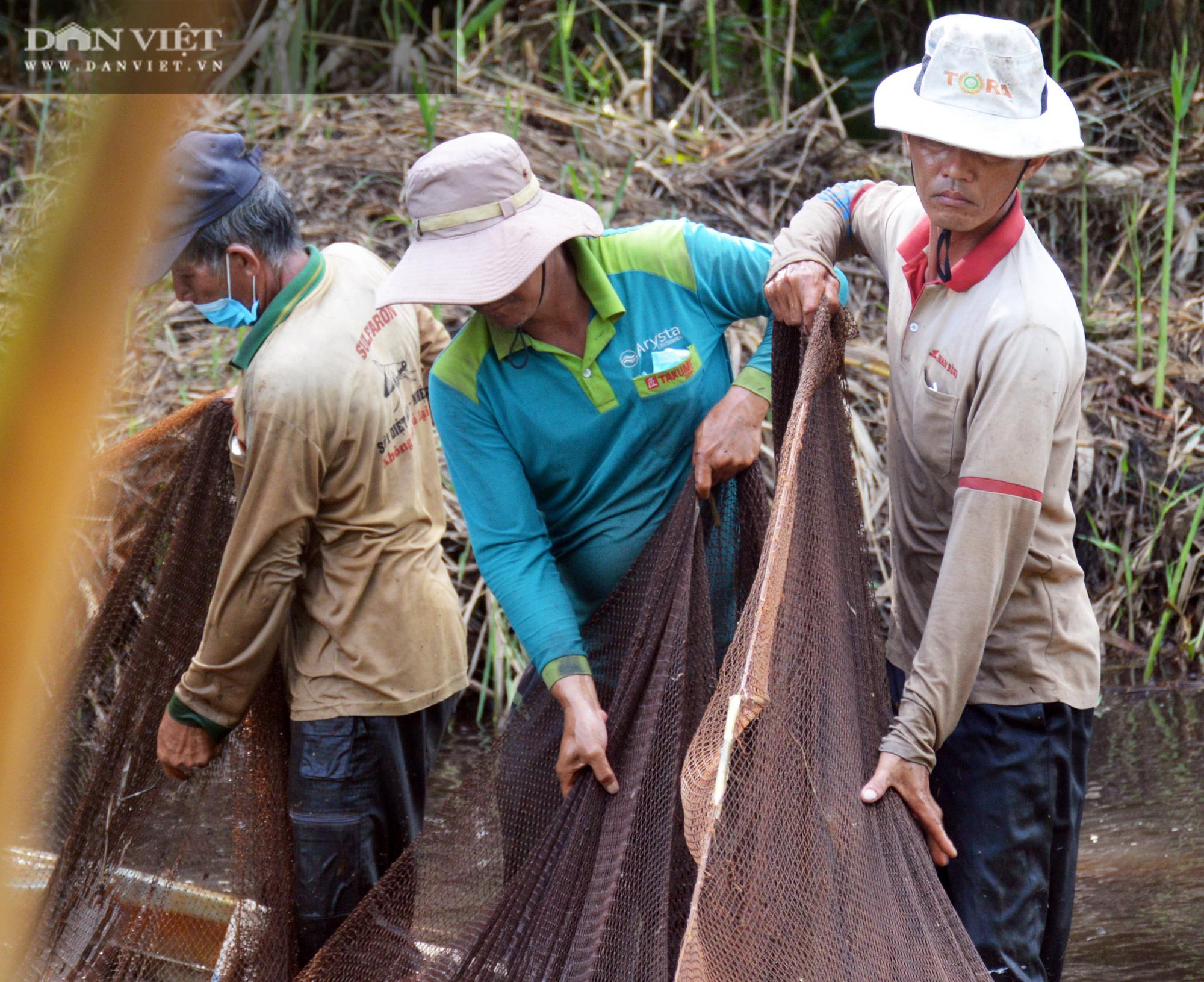 Về vườn quốc gia U Minh Hạ mục sở thị cảnh chụp đìa bắt hàng trăm kg cá đồng - Ảnh 6.