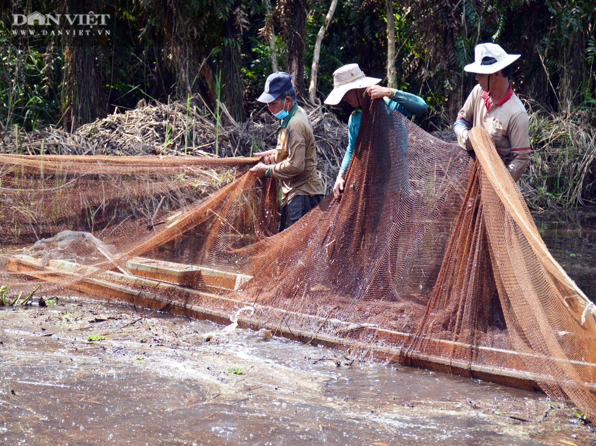 Về vườn quốc gia U Minh Hạ mục sở thị cảnh chụp đìa bắt hàng trăm kg cá đồng - Ảnh 8.