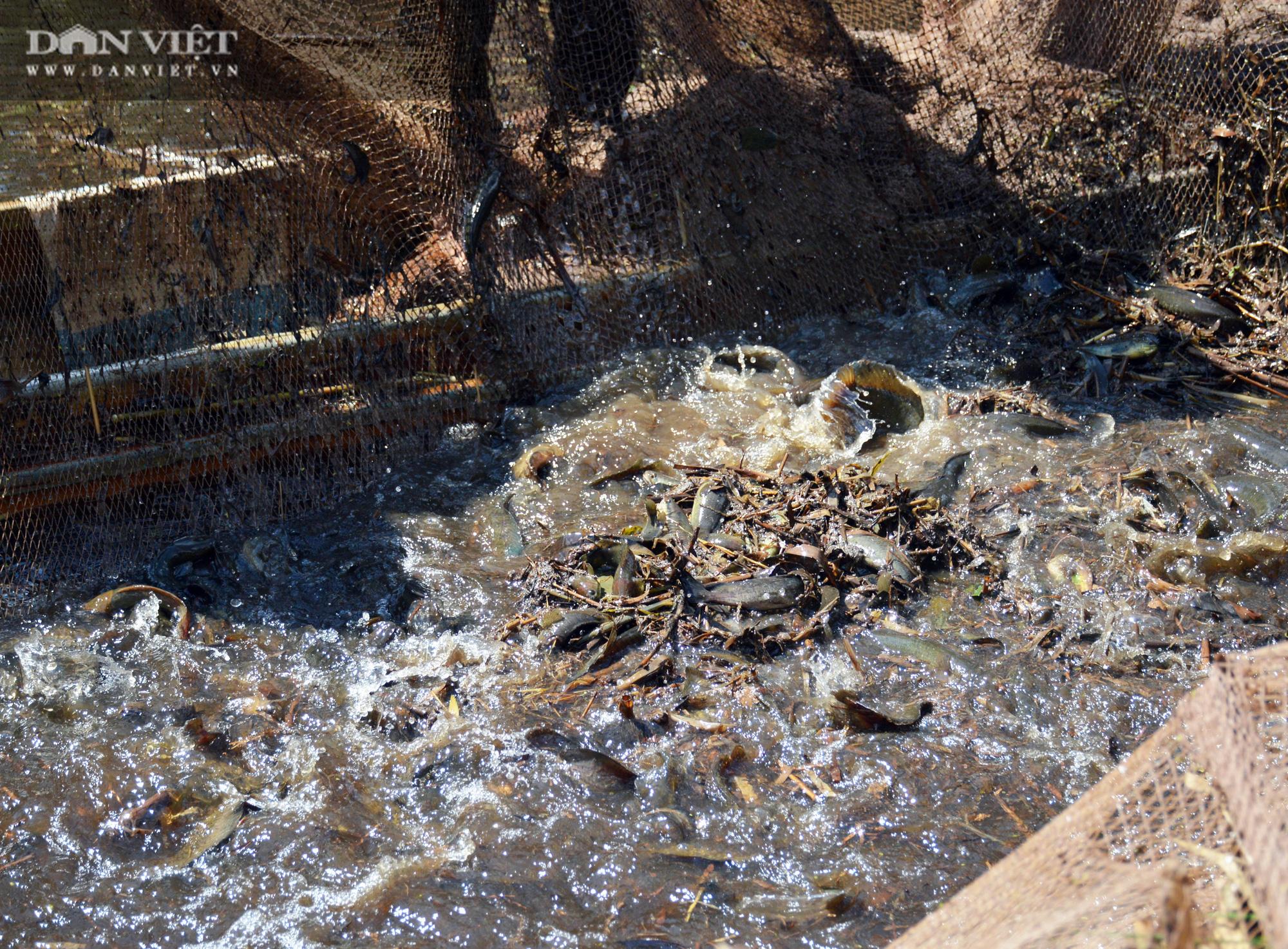 Về vườn quốc gia U Minh Hạ mục sở thị cảnh chụp đìa bắt hàng trăm kg cá đồng - Ảnh 10.