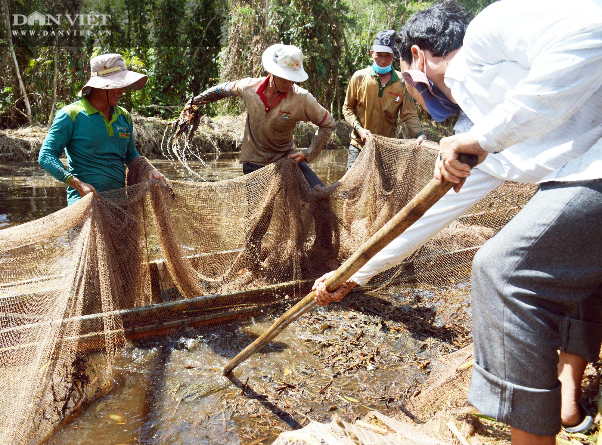 Về vườn quốc gia U Minh Hạ mục sở thị cảnh chụp đìa bắt hàng trăm kg cá đồng - Ảnh 11.