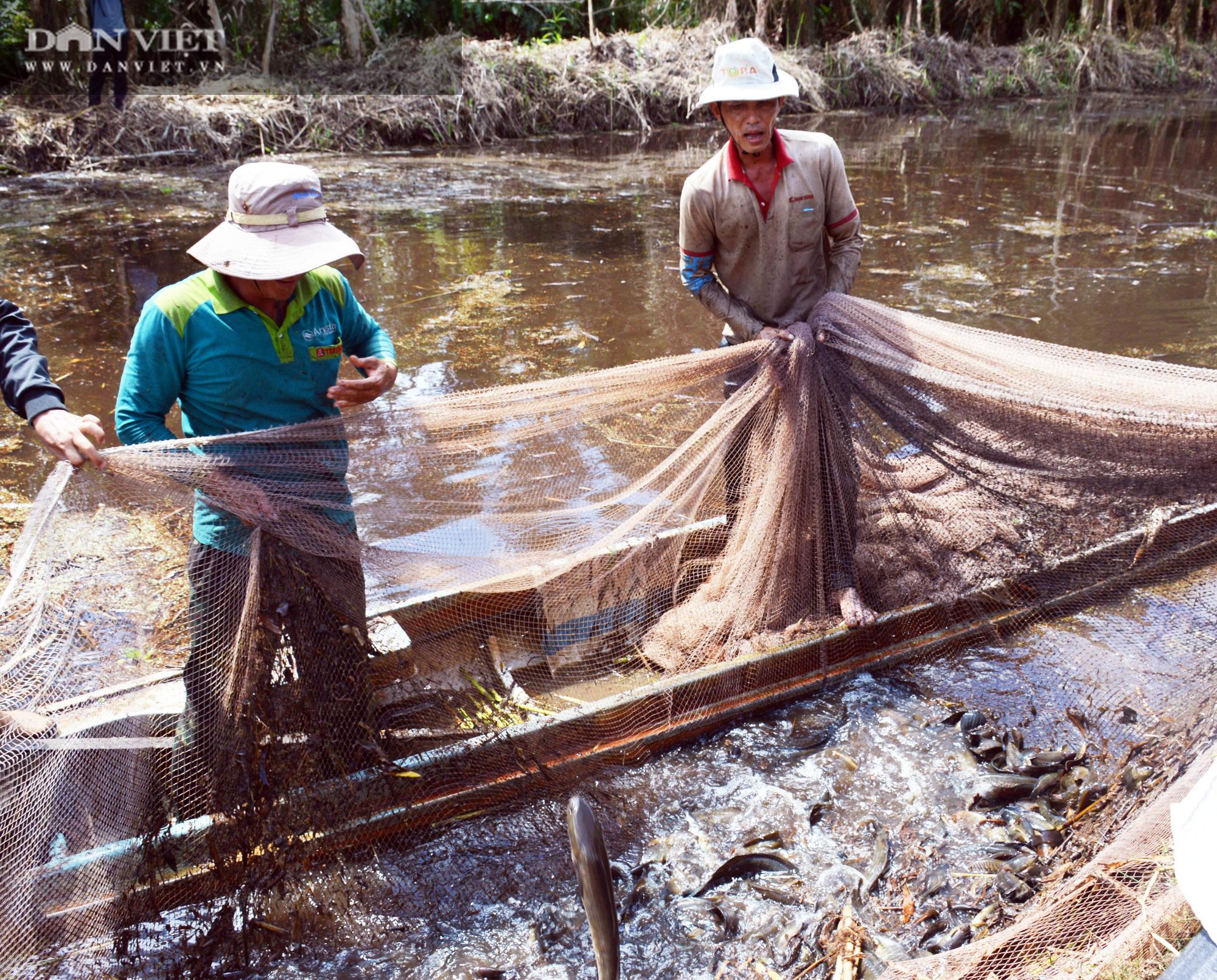 Về vườn quốc gia U Minh Hạ mục sở thị cảnh chụp đìa bắt hàng trăm kg cá đồng - Ảnh 12.