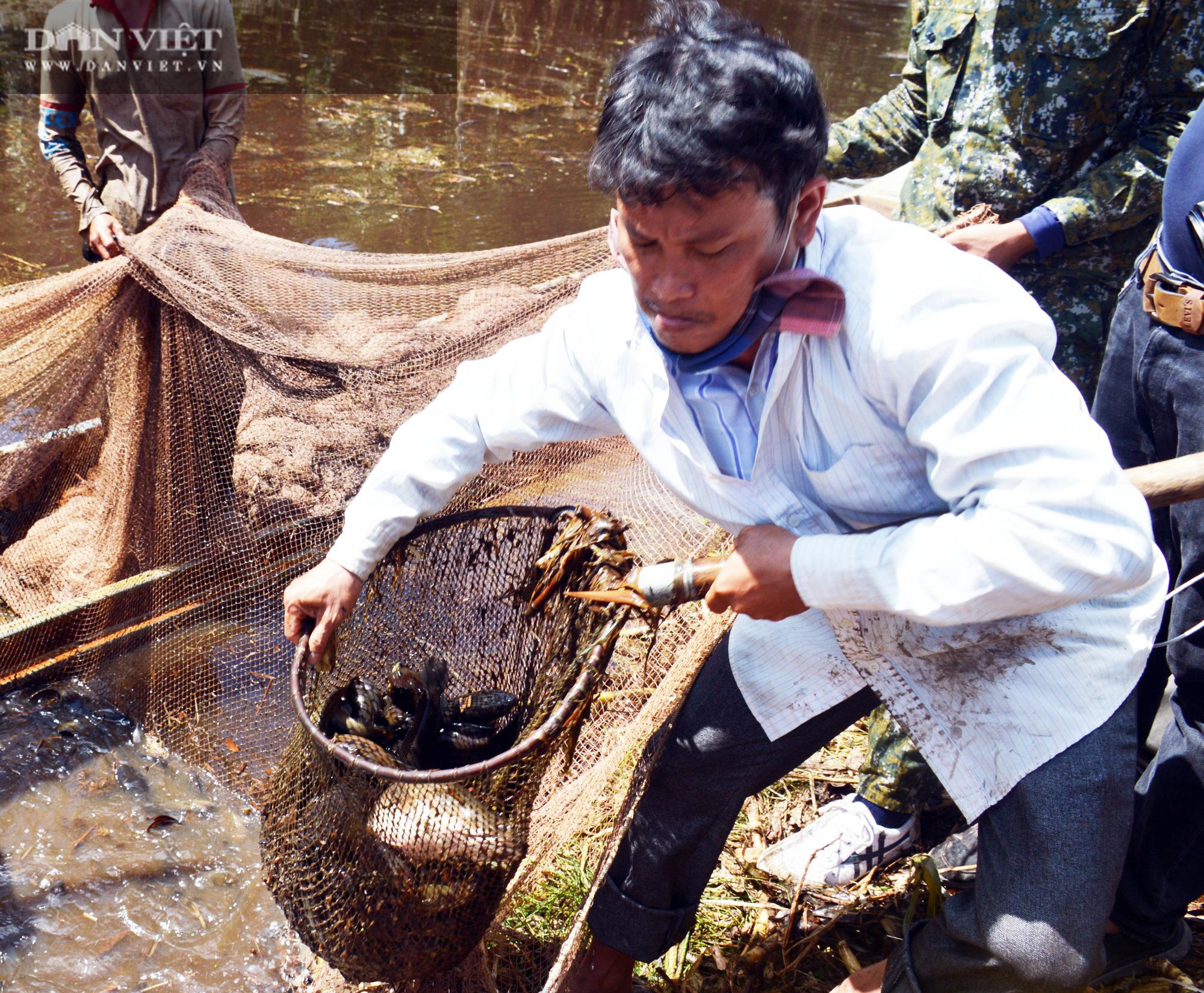 Về vườn quốc gia U Minh Hạ mục sở thị cảnh chụp đìa bắt hàng trăm kg cá đồng - Ảnh 13.