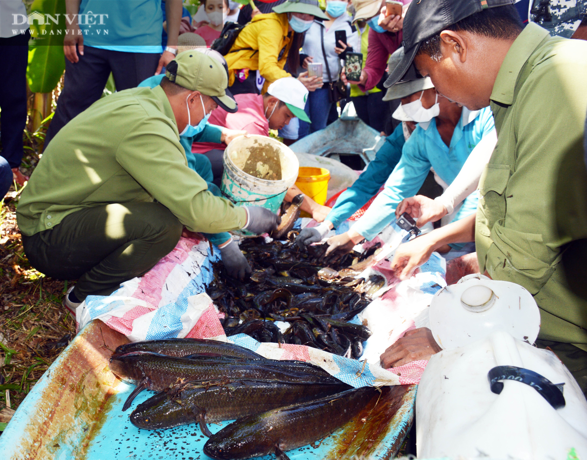 Về vườn quốc gia U Minh Hạ mục sở thị cảnh chụp đìa bắt hàng trăm kg cá đồng - Ảnh 16.