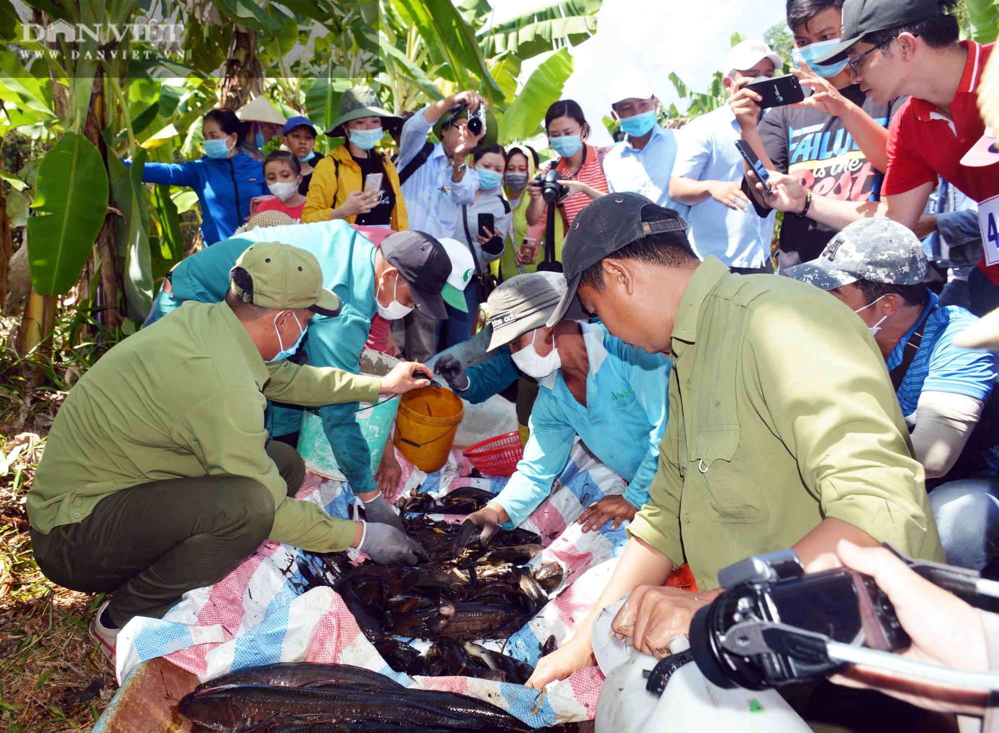 Về vườn quốc gia U Minh Hạ mục sở thị cảnh chụp đìa bắt hàng trăm kg cá đồng - Ảnh 17.