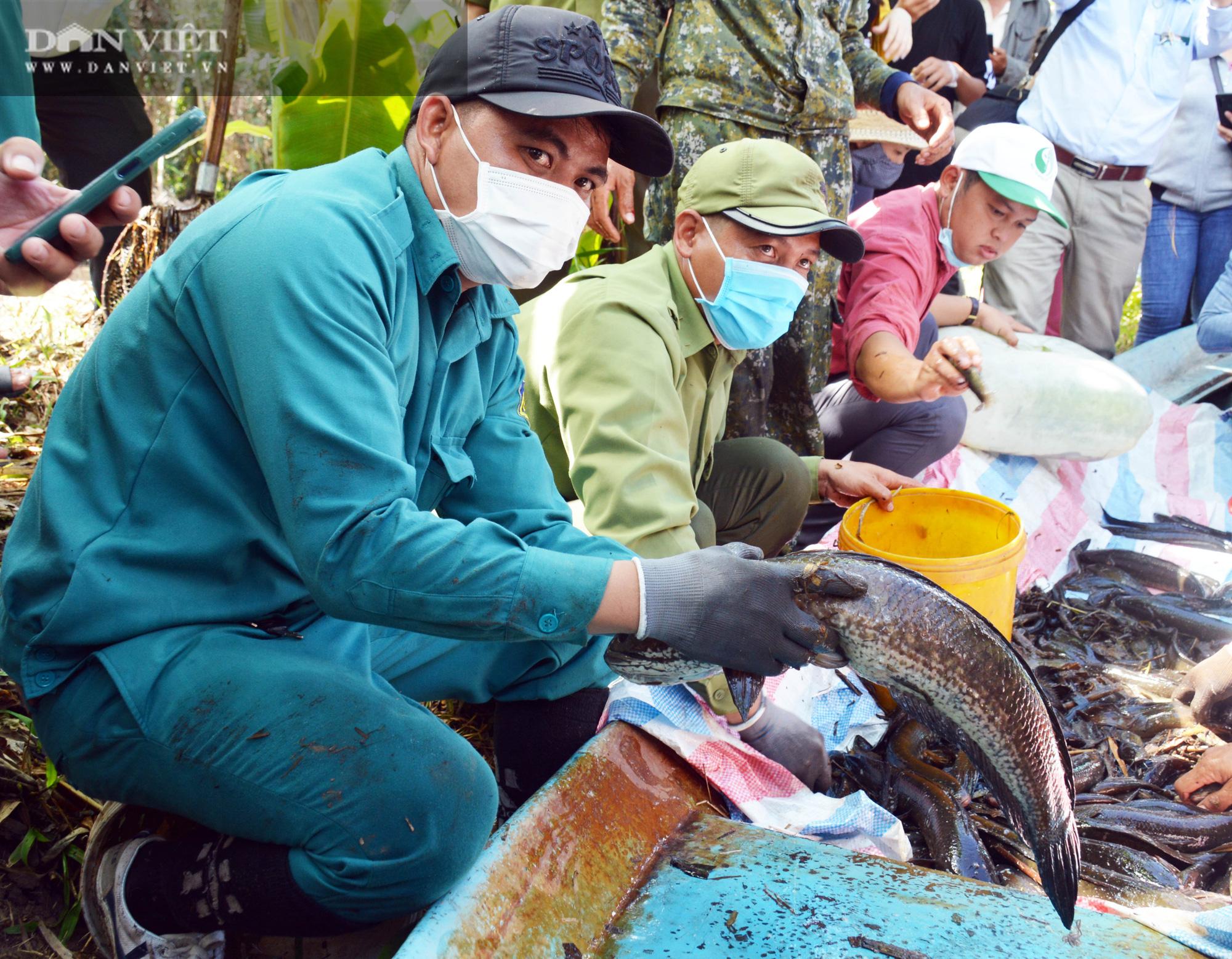 Về vườn quốc gia U Minh Hạ mục sở thị cảnh chụp đìa bắt hàng trăm kg cá đồng - Ảnh 18.