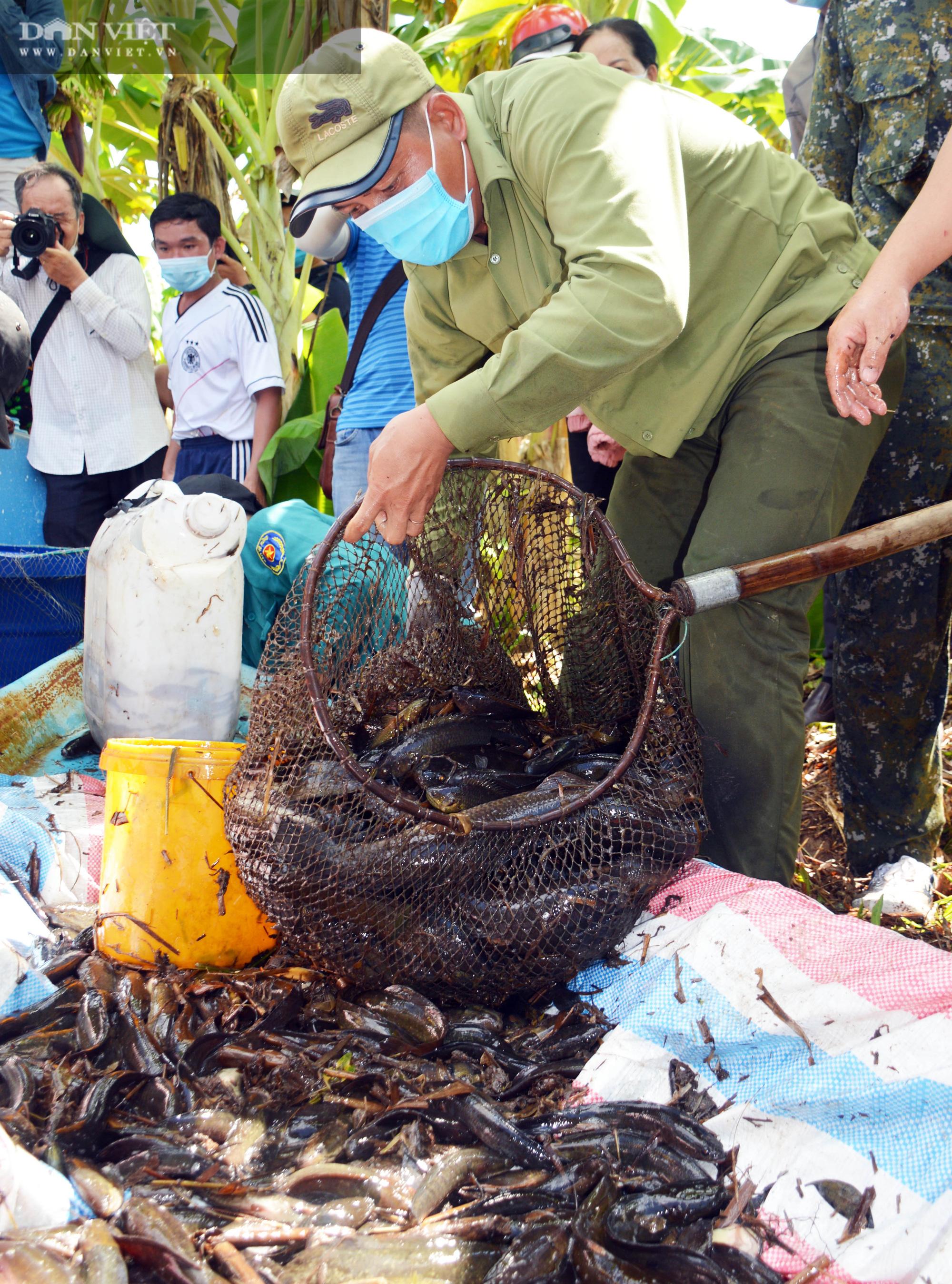 Về vườn quốc gia U Minh Hạ mục sở thị cảnh chụp đìa bắt hàng trăm kg cá đồng - Ảnh 19.