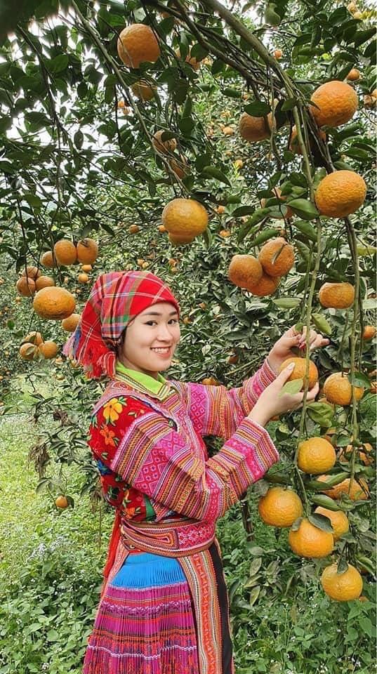 """Bí quyết bắt cây cam sành """"đẻ"""" hàng tạ quả/vụ của tỷ phú cam Hà Giang - Ảnh 3."""