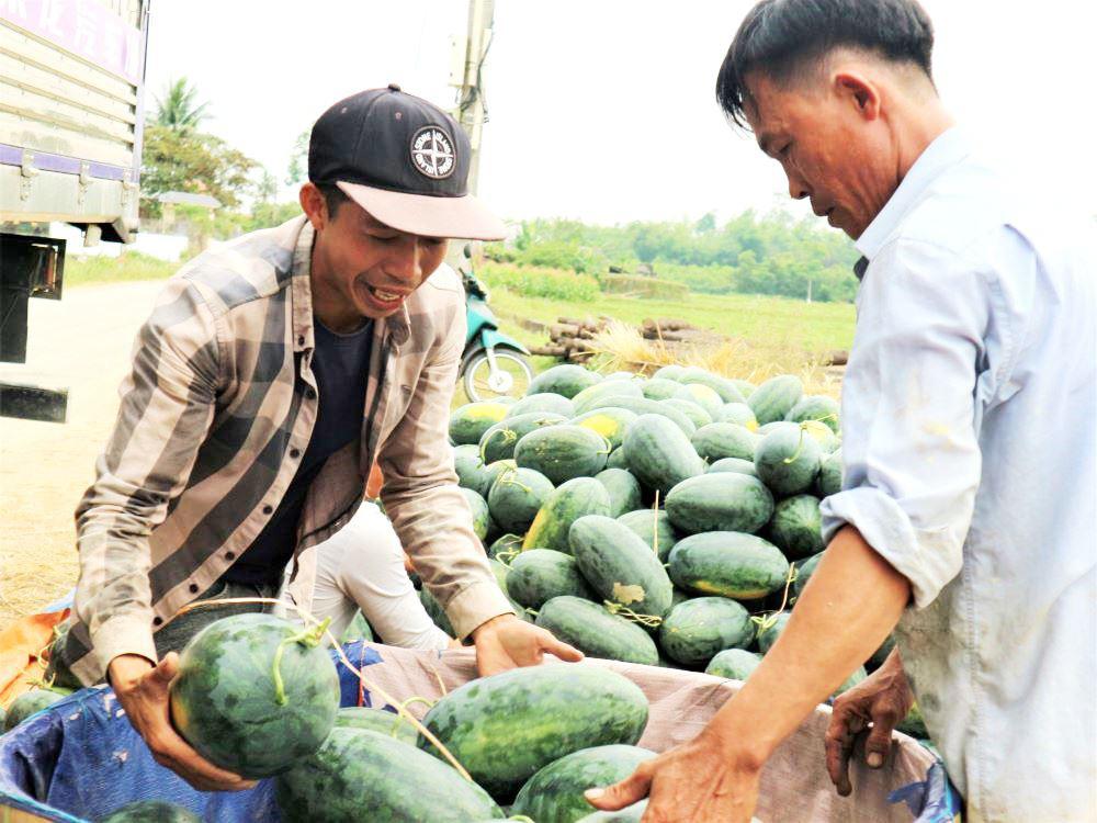 """Ở vựa dưa hấu lớn nhất Quảng Nam, nông dân thấp thỏm đứng ngồi không yên vì dưa hấu """"sáng một giá, chiều một giá"""" - Ảnh 5."""