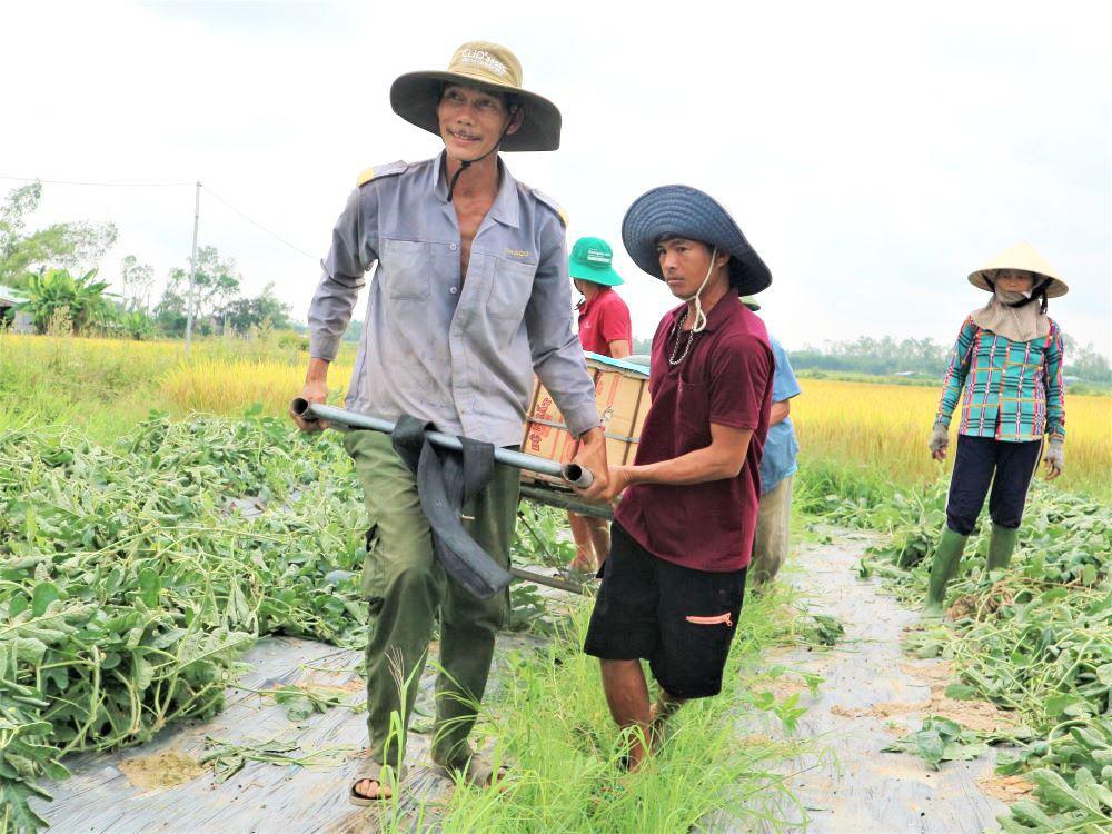"""Ở vựa dưa hấu lớn nhất Quảng Nam, nông dân thấp thỏm đứng ngồi không yên vì dưa hấu """"sáng một giá, chiều một giá"""" - Ảnh 8."""