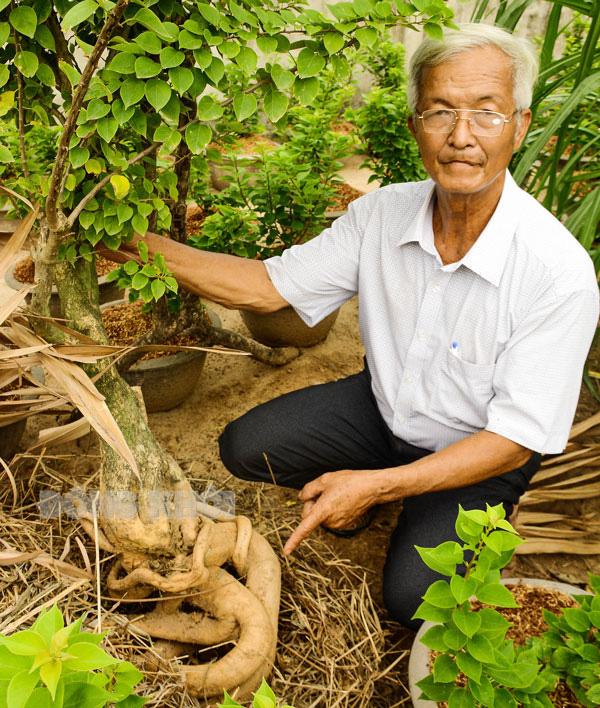 Chuyện lạ Bến Tre: Trồng hoa giấy lấy rễ, rễ càng to dài càng lắm tiền một thành viên CLB ND tỷ phú phát tài - Ảnh 1.