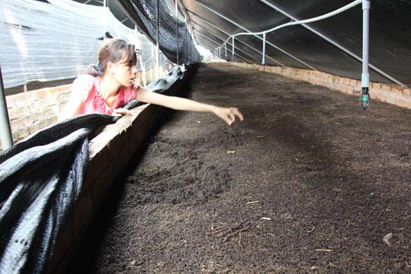 Đắk Lắk: Nuôi loài ăn bẩn, ở bẩn nhưng giúp nông dân trồng cây gì, nuôi con gì cũng chuẩn sạch - Ảnh 1.
