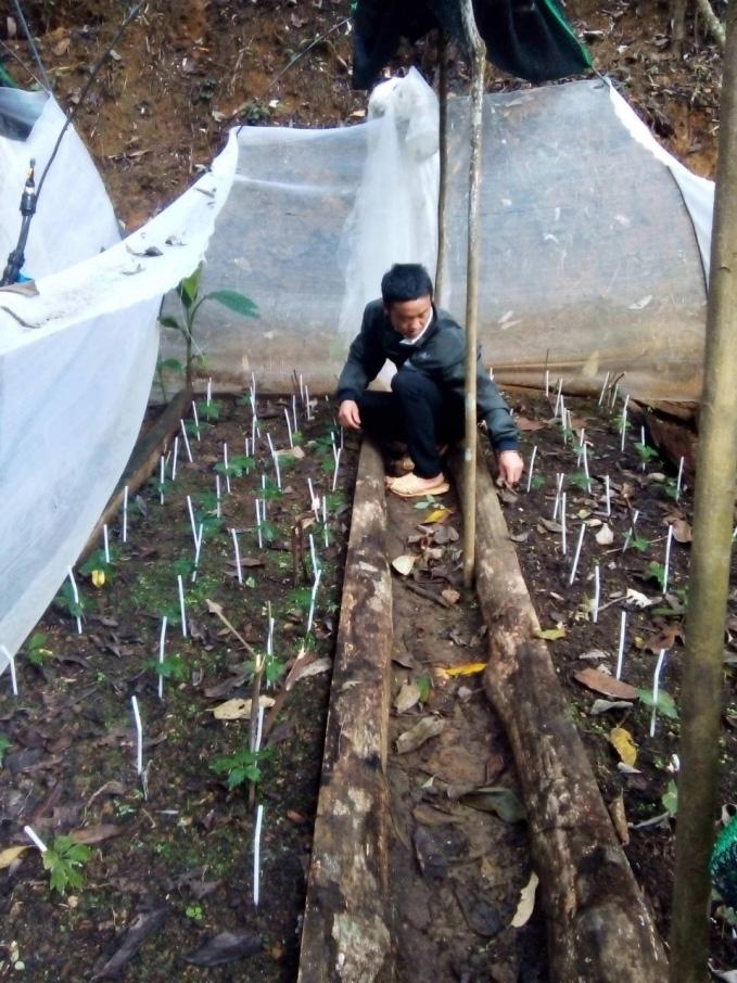 Loại cây dễ trồng, ném hạt ở đâu lên ở đó, không tốn công chăm giúp nông dân Tuần Giáo đổi đời - Ảnh 3.