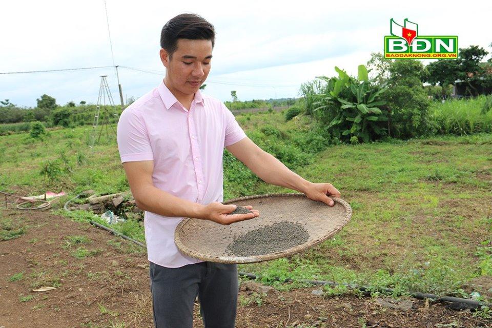 Đắk Nông: Nghỉ việc ở Đồng Nai, trai đẹp về làng trồng mồng tơi tuốt hạt phơi khô bán vô Sài Gòn - Ảnh 3.