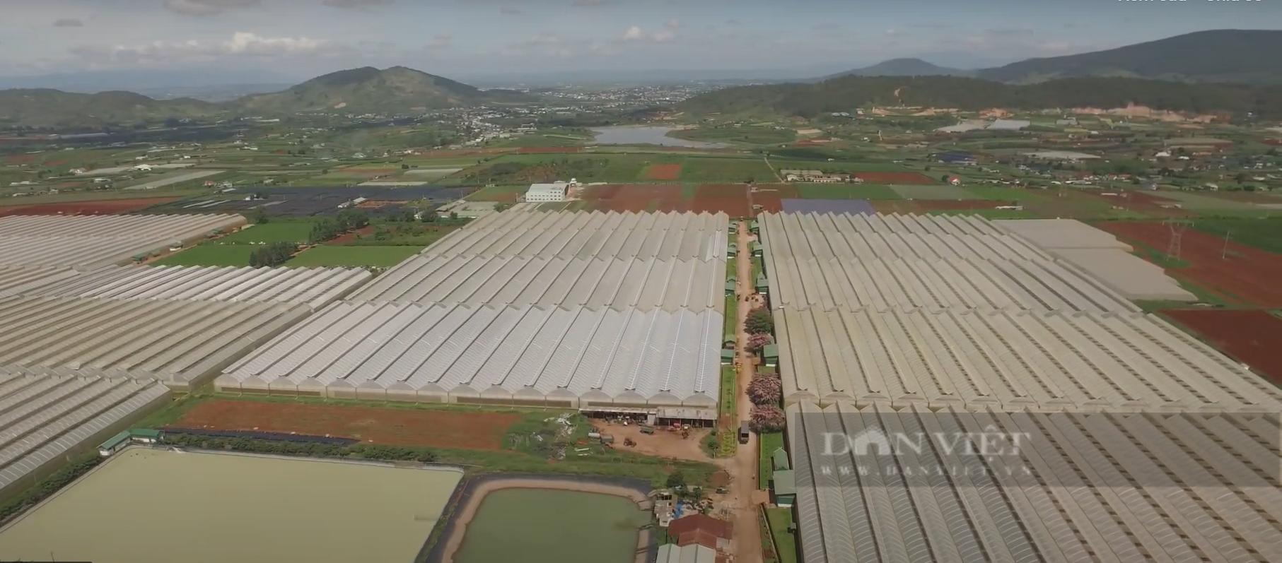 """Chuyển đổi số trong nông nghiệp ở Lâm Đồng (bài 1): Nông dân, doanh nghiệp đều tham gia """"cuộc chơi"""" công nghệ - Ảnh 3."""
