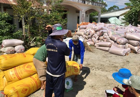 ĐBSCL: Nông dân bán lúa nhanh, giá gạo xuất khẩu tăng - Ảnh 2.