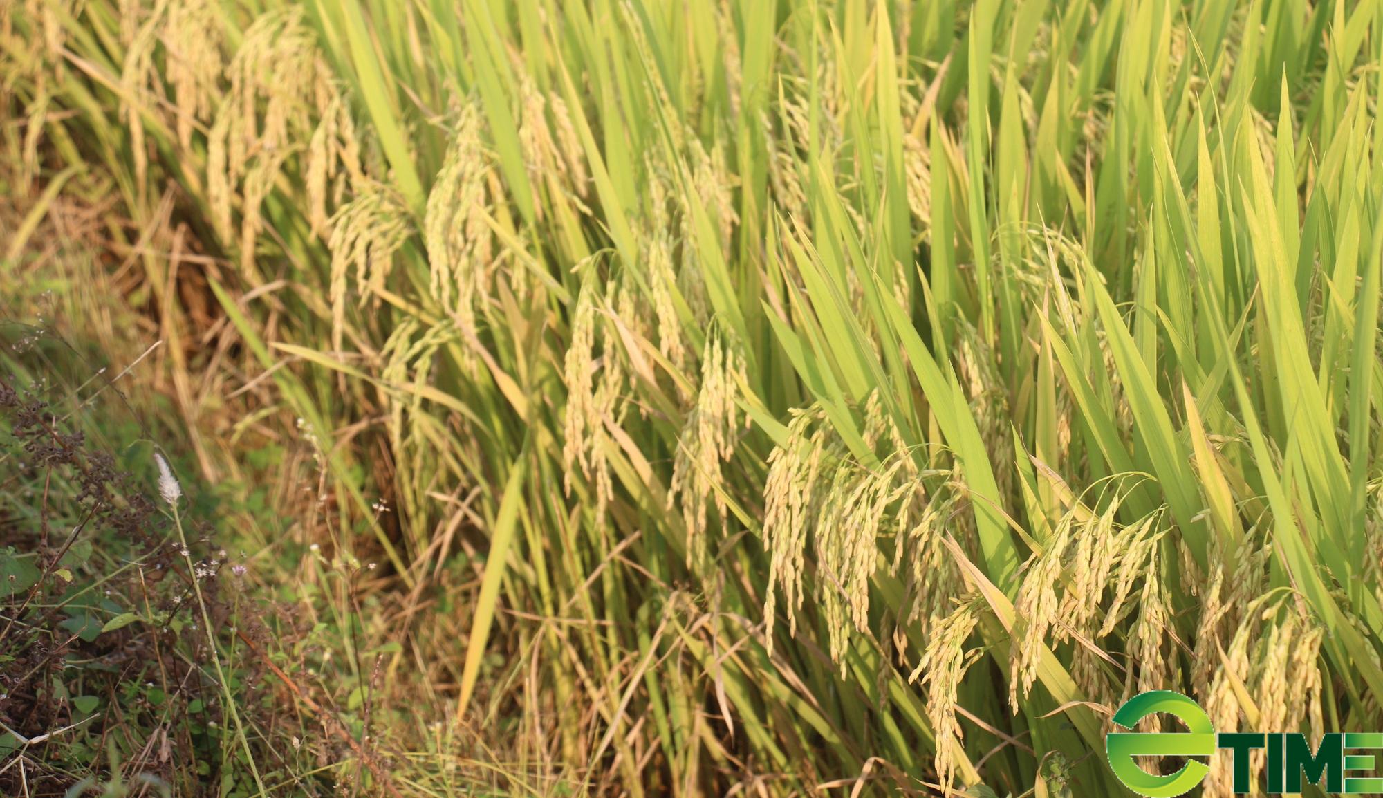 Nông dân hết lo cảnh thiếu nước nhờ kênh tưới Thượng Sơn - Ảnh 2.