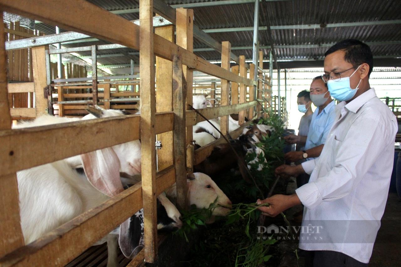 """Đồng Nai: Nuôi heo rừng bằng cách này """"ăn trọn"""" doanh thu, chẳng lo giá thức ăn chăn nuôi tăng nóng - Ảnh 1."""