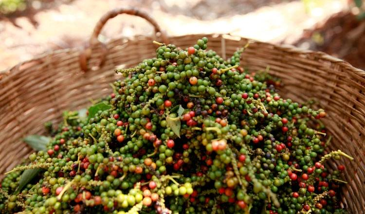 Giá nông sản hôm nay: Giá tiêu vẫn tăng tốc, cao nhất 89.000 đồng/kg - Ảnh 1.