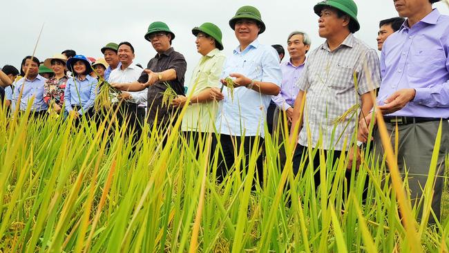 """Quảng Trị: Chuyển đổi số """"đòn bẩy"""" thúc đẩy nông nghiệp phát triển - Ảnh 1."""
