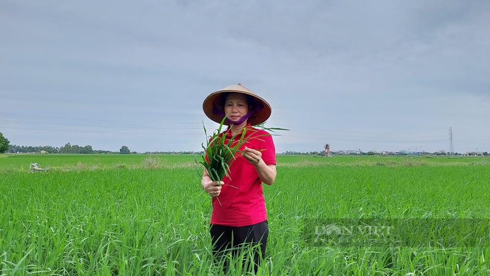 Nâng cao vai trò của Hội Nông dân Việt Nam trong việc hỗ trợ nông dân khởi nghiệp, sáng tạo - Ảnh 6.