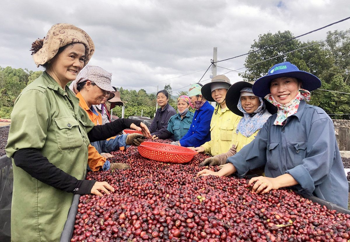 Nâng cao vai trò của Hội Nông dân Việt Nam trong việc hỗ trợ nông dân khởi nghiệp, sáng tạo - Ảnh 1.