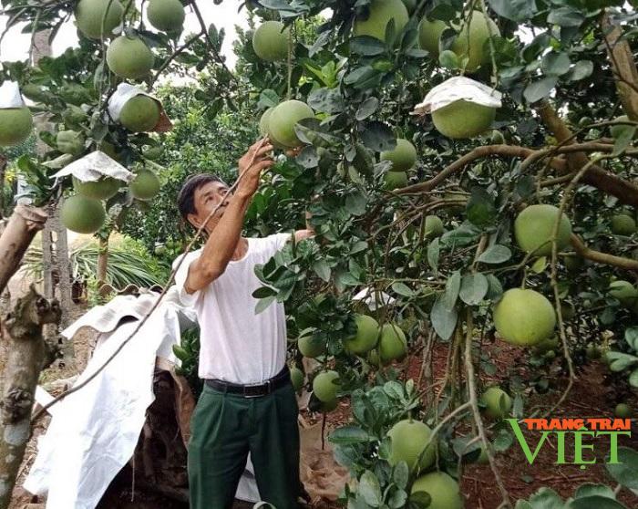 Hội Nông dân tỉnh Hoà Bình: Tập huấn, hỗ trợ hội viên phát triển kinh tế - Ảnh 1.