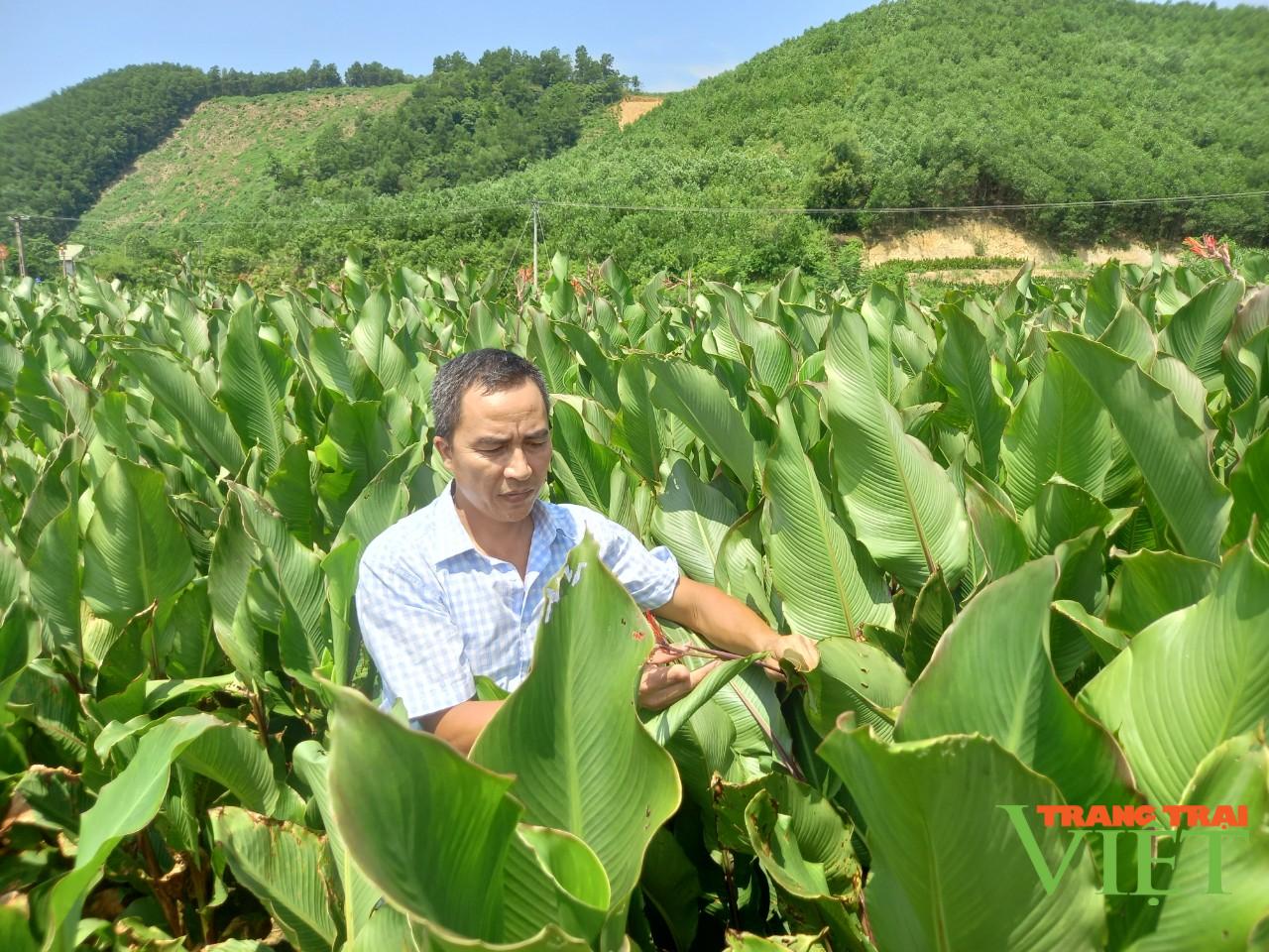 Hội Nông dân tỉnh Hoà Bình: Tập huấn, hỗ trợ hội viên phát triển kinh tế - Ảnh 4.