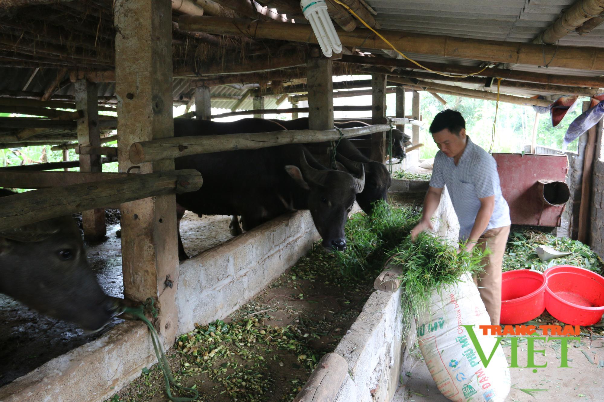 Hội Nông dân tỉnh Hoà Bình: Tập huấn, hỗ trợ hội viên phát triển kinh tế - Ảnh 6.