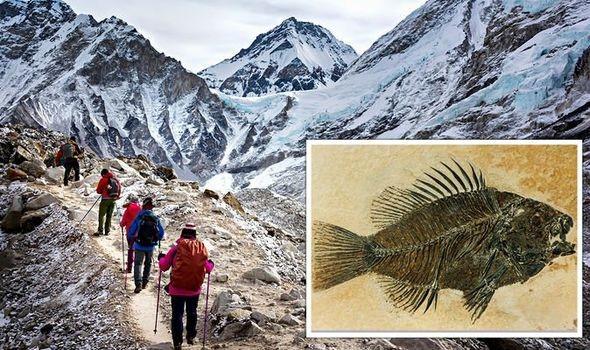 Hóa thạch biển được tìm thấy trên đỉnh Everest có thể là bằng chứng của Đại hồng thủy - Ảnh 1.
