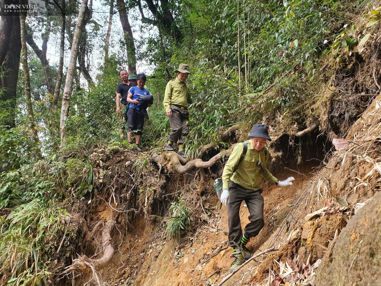 Phá rừng pơ mu VQG Hoàng Liên: UBND tỉnh Lào Cai sẽ tiếp tục xử lý trách nhiệm tổ chức, cá nhân có liên quan - Ảnh 4.