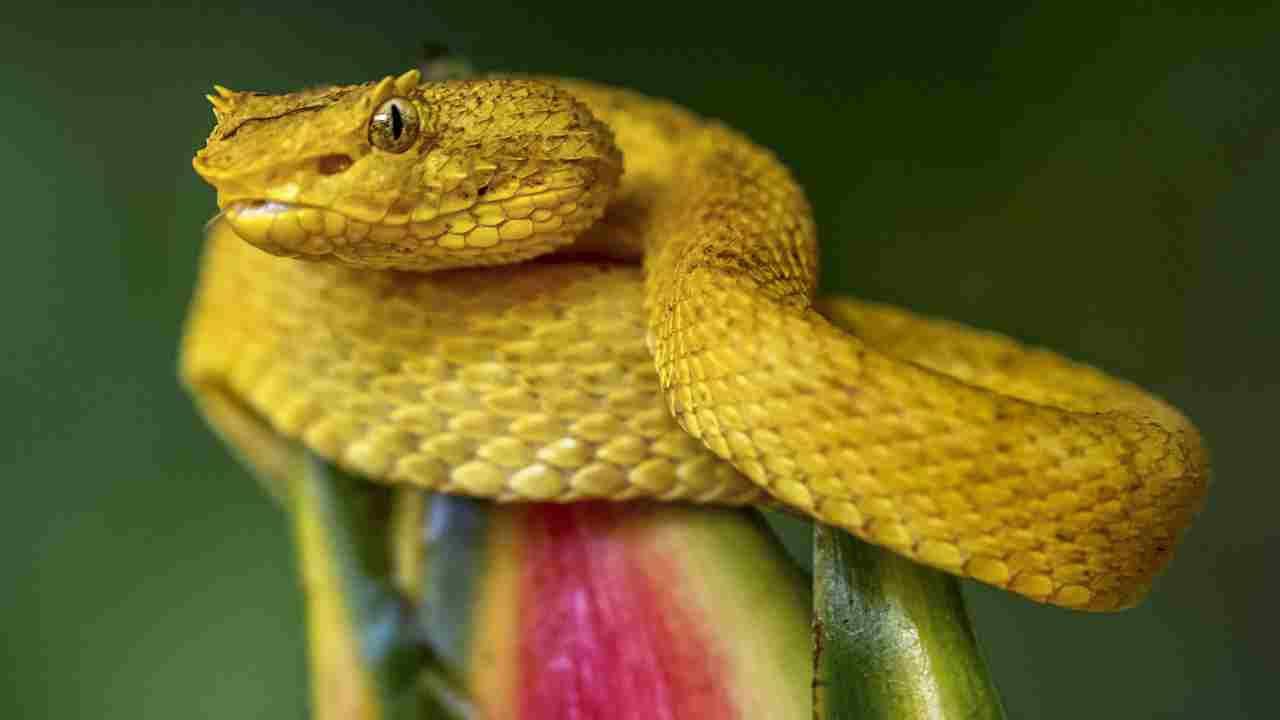 """Hòn đảo nguy hiểm nhất thế giới cứ 1m2 có 5 con rắn độc là """"nhà"""" của loài rắn độc nhất thế giới nào? - Ảnh 10."""