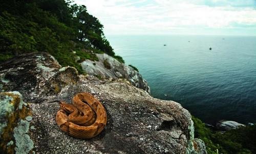 """Hòn đảo nguy hiểm nhất thế giới cứ 1m2 có 5 con rắn độc là """"nhà"""" của loài rắn độc nhất thế giới nào? - Ảnh 2."""