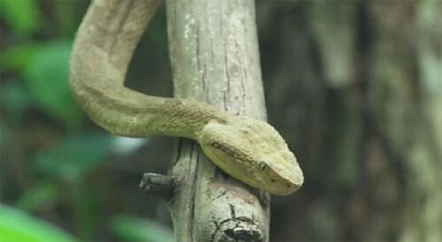"""Hòn đảo nguy hiểm nhất thế giới cứ 1m2 có 5 con rắn độc là """"nhà"""" của loài rắn độc nhất thế giới nào? - Ảnh 5."""