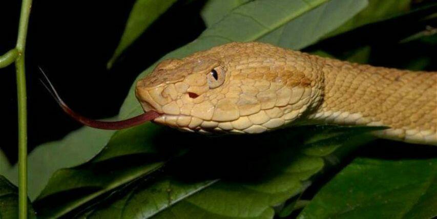 """Hòn đảo nguy hiểm nhất thế giới cứ 1m2 có 5 con rắn độc là """"nhà"""" của loài rắn độc nhất thế giới nào? - Ảnh 6."""