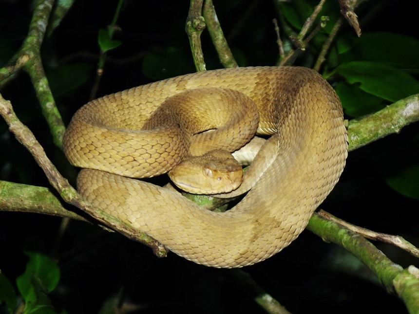 """Hòn đảo nguy hiểm nhất thế giới cứ 1m2 có 5 con rắn độc là """"nhà"""" của loài rắn độc nhất thế giới nào? - Ảnh 7."""