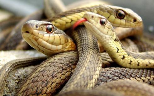 """Hòn đảo nguy hiểm nhất thế giới cứ 1m2 có 5 con rắn độc là """"nhà"""" của loài rắn độc nhất thế giới nào? - Ảnh 9."""