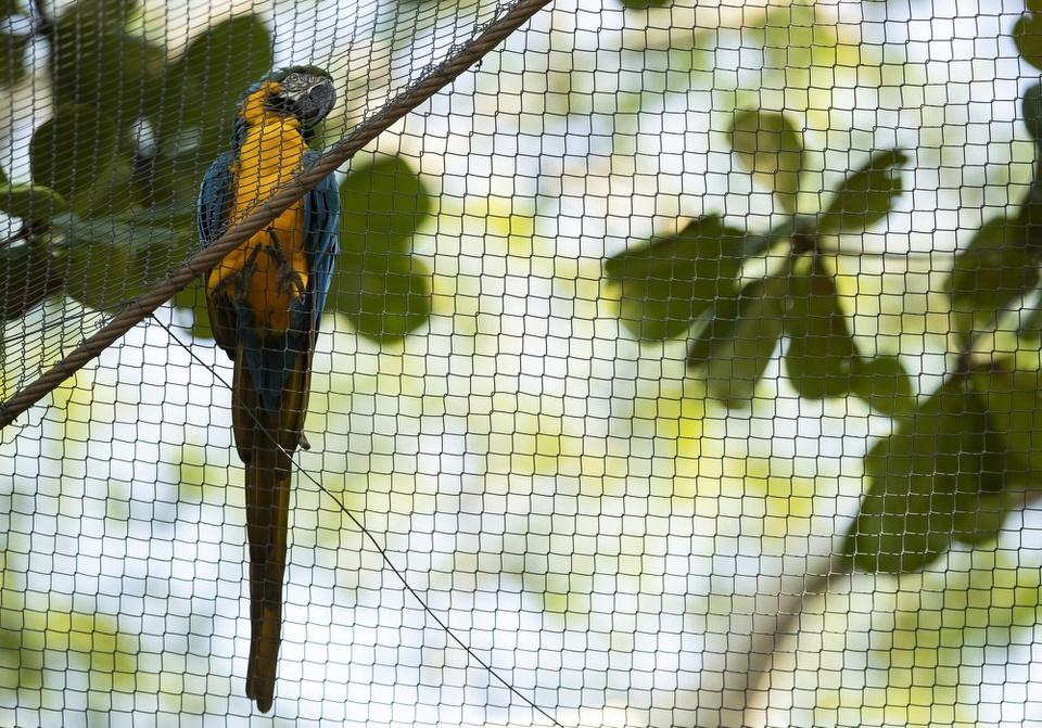 Con vẹt cô đơn hơn 20 năm - Ảnh 2.