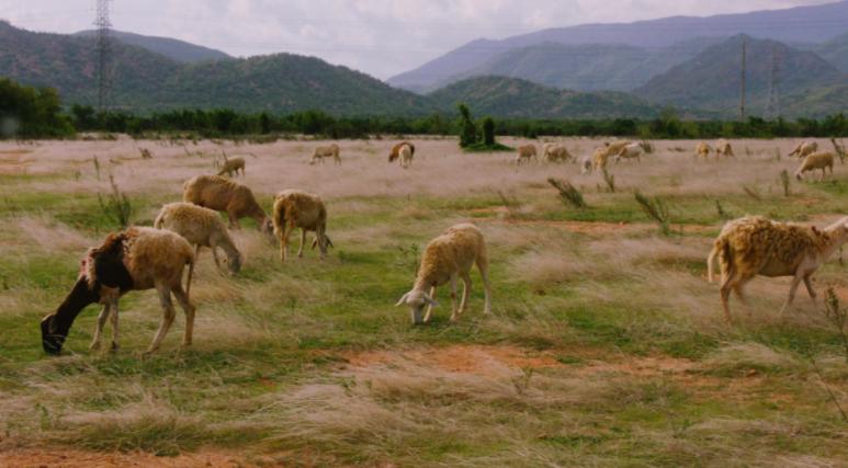 """Sau """"Đi về nhà"""", Đen Vâu gây sốt khi hé lộ MV """"Trốn tìm"""" giữa đàn cừu - Ảnh 1."""