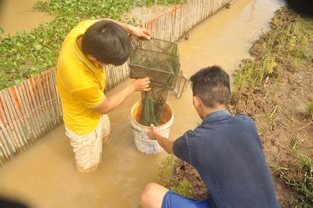 Bất ngờ ao nuôi cua đồng ở tỉnh Đồng Nai, bắt lên toàn cua ngon, vàng ươm - Ảnh 1.