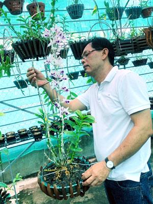 Tiền Giang: Lạc vào vườn lan 80.000 giò ở TP Mỹ Tho, có nhiều cây lan giã hạc đột biến - Ảnh 1.