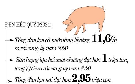 Chủ động về lợn nái, nhiều tỉnh tái đàn nhanh  - Ảnh 3.