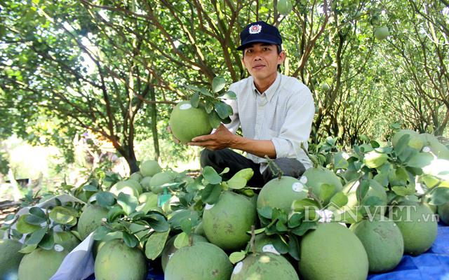 Các loại trái cây, rau củ tươi hoặc đông lạnh được tiêu thụ khá mạnh tại thị trường Đài Loan