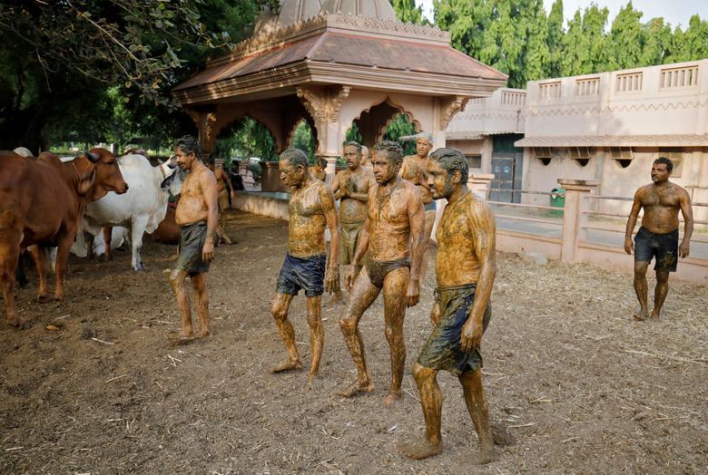 Hình ảnh một số người dân Ấn Độ dùng phân, nước tiểu bò bò để chữa Covid-19 - Ảnh 9.