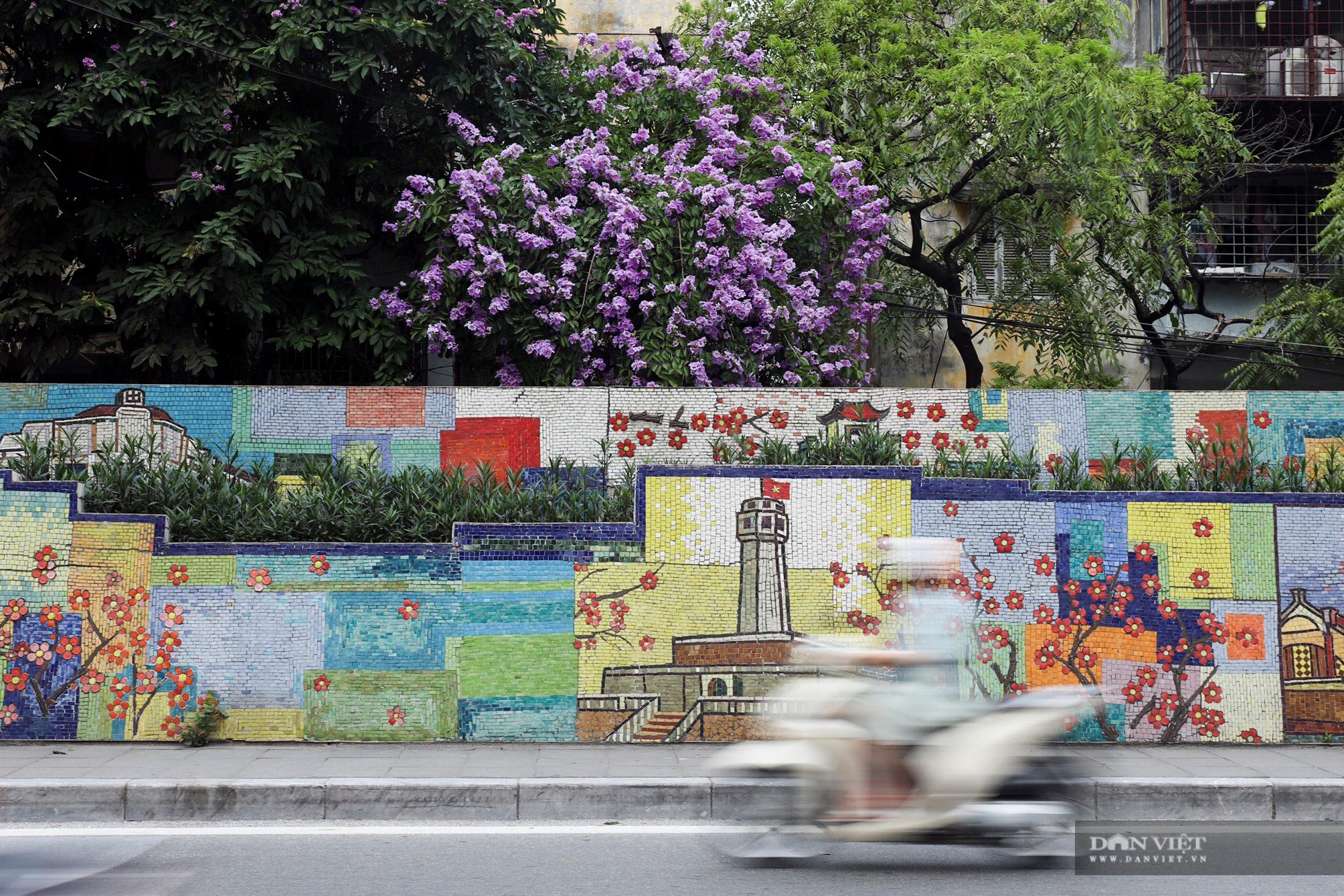 Hoa bằng lăng: loài hoa biểu tượng của sự thủy chung nở rộ khắp đường phố Hà Nội - Ảnh 2.