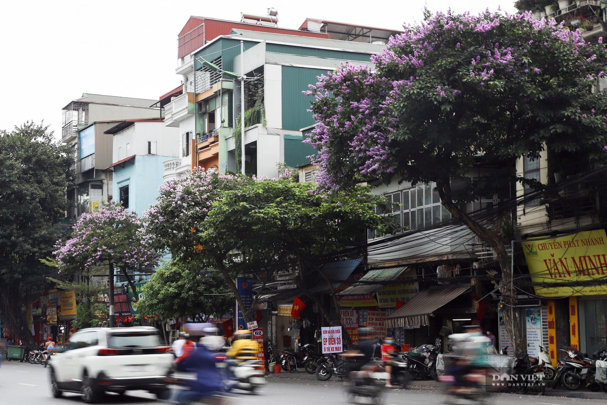 Hoa bằng lăng: loài hoa biểu tượng của sự thủy chung nở rộ khắp đường phố Hà Nội - Ảnh 5.